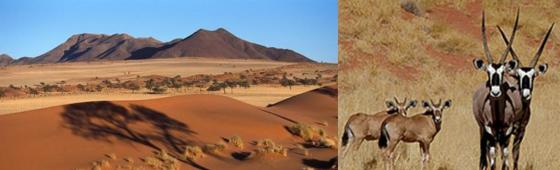 """NAMIBIE """"le monde des Dunes Oranges"""""""