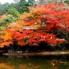 JAPON «le Pays du Soleil Levant»