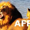 CIRCUITS EN AFRIQUE