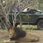 Afrique du Sud - Parc Kapama