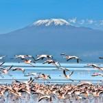 Kenya - Lac Nakuru
