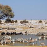 Namibie - Parc Etosha