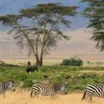 Tanzanie - Parc Serengeti