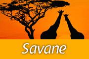 voyage-savane