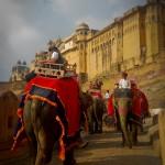 Rajasthan - Jaipur - Fort Amber