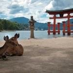 Japon - Ile Miyajima - Torii Itsukushima