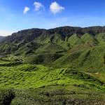 Malaisie - Plantations de thé de Cameron Highlands