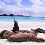 Galapagos - Otaries