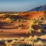 Namibie - Désert de Namib
