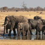 Zimbabwe - Parc de Hwange