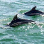 croisière à la rencontre des dauphins de la baie des îles NOUVELLE Zélande